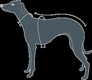 measure a dog
