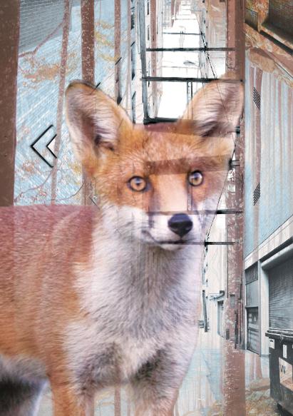 fox-monicam-web